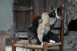 chat famélique