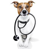 vétérinaire-image1