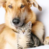 vétérinaire-image8